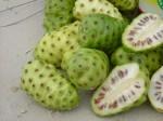 beneficios-do-fruto-noni