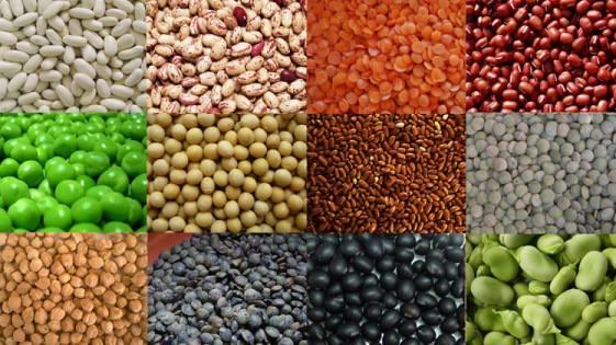 Grãos e proteinas